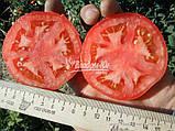 Семена томата БАГИРА F1, 5 гр., фото 3