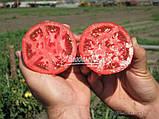 Семена томата БАГИРА F1, 50 гр., фото 2