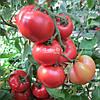 Семена розового томата ХАННИ МУН F1, 250 семян New!