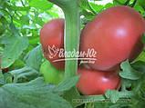 Семена розового томата ФЕНДА F1, 250 семян, фото 3