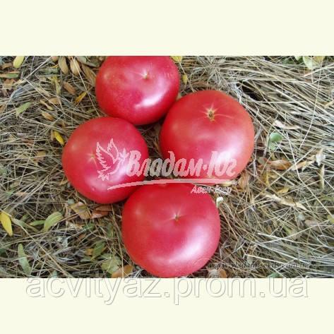 Семена розового томата ФЕНДА F1, 1000 семян