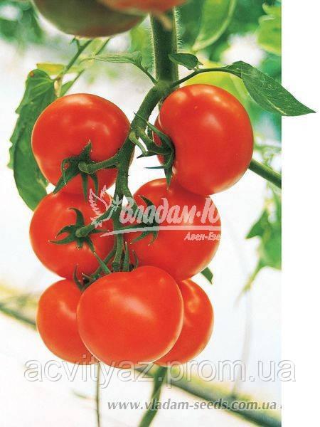 Семена томата КРИСТАЛ F1, 5 гр.