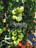Семена томата КРИСТАЛ F1, 5 гр., фото 2