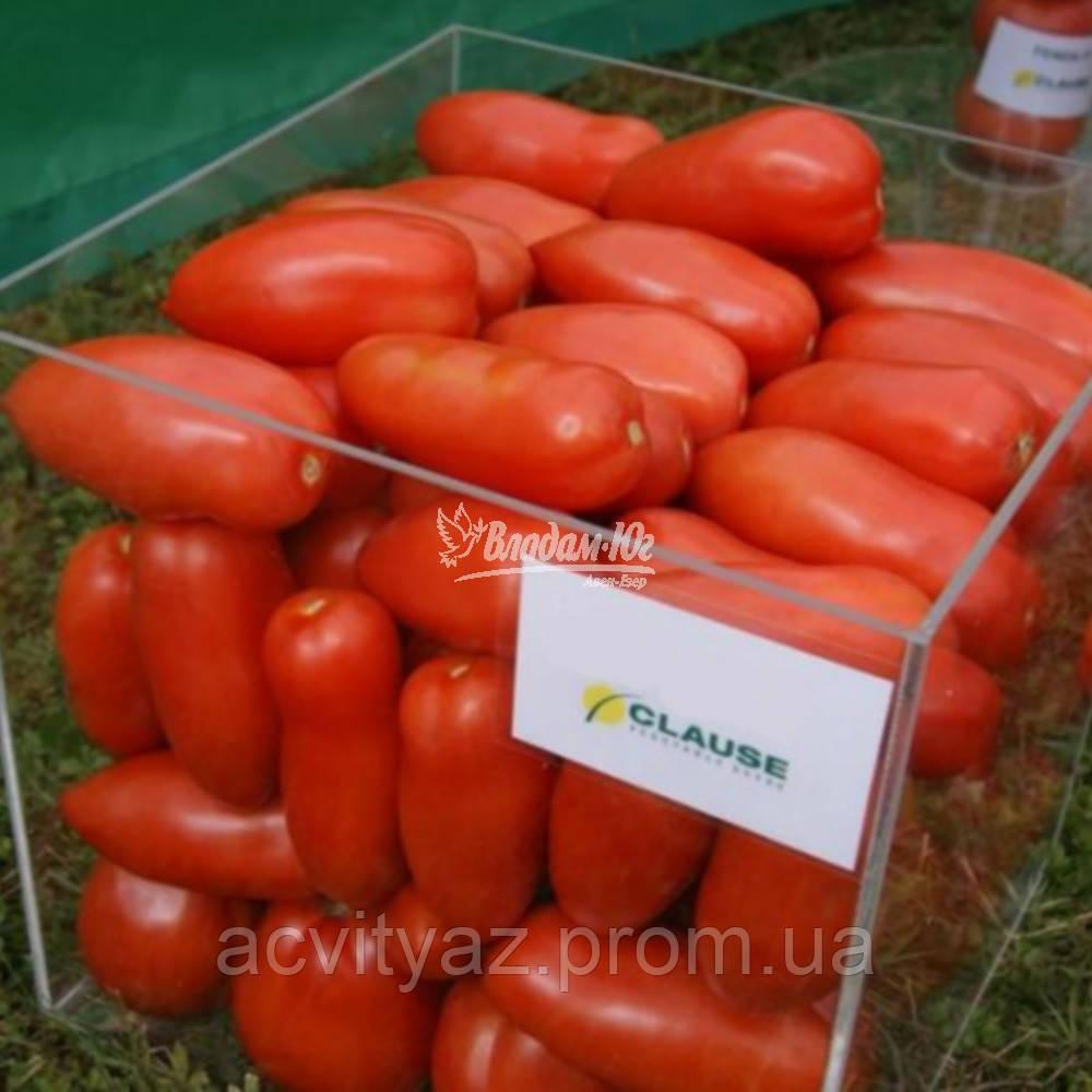 Семена томата АЙДАР F1, 250 семян New!