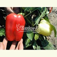 Семена перца НИКИТА F1, 5 грамм