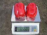 Семена перца ГЕРКУЛЕС F1, 50 гр, фото 3