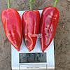 Семена перца КАПЕЛО F1, 500 семян New!