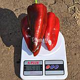 Семена перца РЕДКАН F1, 1000 семян New!, фото 6