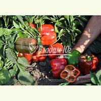 Семена перца КАРИСМА F1, 1000 семян New!