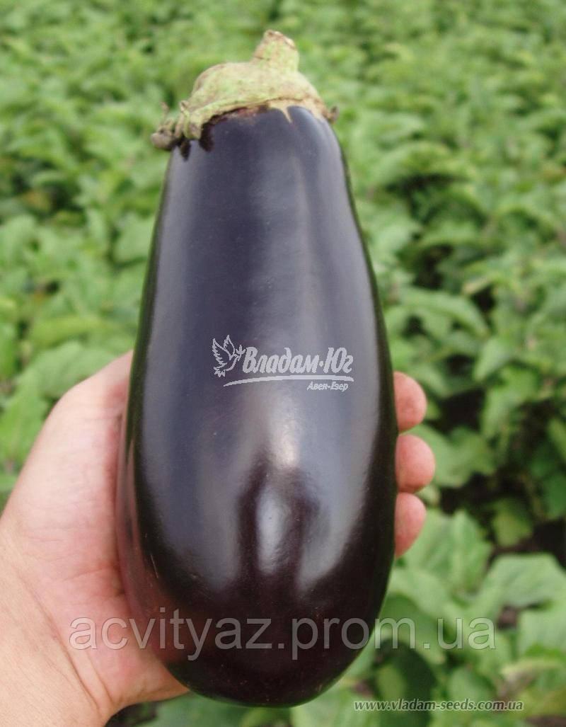 Семена баклажана КЛАССИК F1, 5 гр.
