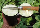 Семена баклажана КЛАССИК F1, 50 гр., фото 3