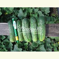 Семена огурца РОЯЛ F1, 10 гр., фото 1