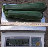 Семена кабачка ТАРМИНО F1, 500 семян, фото 2