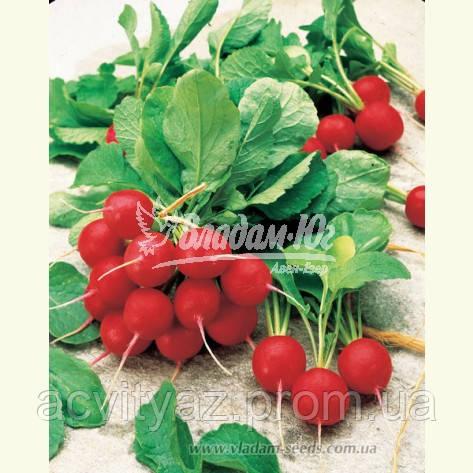 Семена редиса ДЖОЛЛИ, 0, 5 кг.