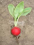 Семена редиса ДЖОЛЛИ, 0, 5 кг., фото 2
