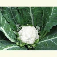 Семена цветной капусты МАЙБАХ F1 (Elisem), 2500 семян, фото 1