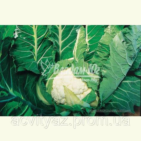 Семена цветной капусты АВИЗО F1, 2500 семян