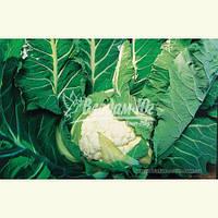 Семена цветной капусты АВИЗО F1, 10000 семян, фото 1