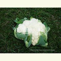 Семена цветной капусты БРИГАНТИНА F1, 1000 семян New!, фото 1