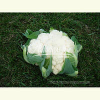 Семена цветной капусты БРИГАНТИНА F1, 2500 семян New!, фото 1