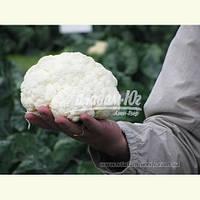 Семена цветной капусты САБОРД F1, 2500 семян New!, фото 1