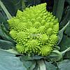 Семена цветной капусты ДЖИТАНО F1, 1000 семян New!
