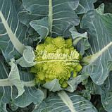 Семена цветной капусты ДЖИТАНО F1, 1000 семян New!, фото 2