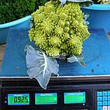 Семена цветной капусты ДЖИТАНО F1, 1000 семян New!, фото 4