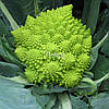 Семена цветной капусты ДЖИТАНО F1, 10000 семян New!