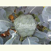 Семена брокколи РУМБА F1, 2500 семян New!, фото 1