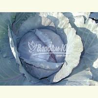 Семена красной капусты РЕДСКАЙ F1, 2500 семян, фото 1