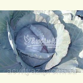 Семена красной капусты РЕДСКАЙ F1, 2500 семян