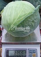 Семена капусты БРАВО F1, 2500 семян