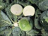 Семена капусты КАПОРАЛ F1, 10000 семян, фото 3