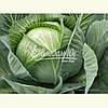Семена капусты КАУНТ F1, 10000 семян (Elisem)