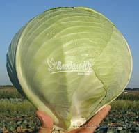 Семена капусты МАРАБУ F1, 10000 семян (Elisem), фото 1
