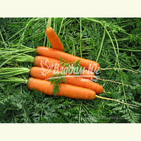Семена моркови САТУРНО F1, 25000 семян, фото 1