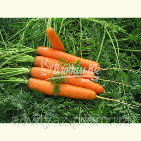 Семена моркови САТУРНО F1, 100000 семян