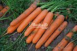 Семена моркови САТУРНО F1, 100000 семян, фото 2