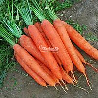 Семена моркови МАТЧ F1, 25000 семян (Elisem) New!, фото 1