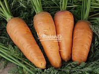 Семена моркови БОЛТЕКС, 0, 5 кг, фото 1