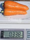 Насіння моркви ЗАБАРВЛЕННЯ, 0, 5 кг, фото 2