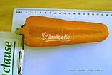 Насіння моркви ЗАБАРВЛЕННЯ, 0, 5 кг, фото 3