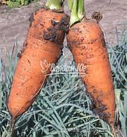 Семена моркови ШАНТАНЕ, 0, 5 кг, фото 1