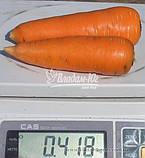 Насіння моркви ШАНТАНЕ, 0, 5 кг, фото 2