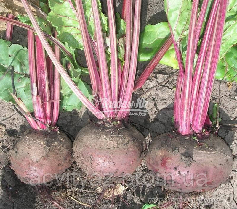 Семена свеклы ДЕТРОЙТ, 1 кг