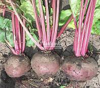 Семена свеклы ДЕТРОЙТ, 1 кг, фото 1