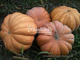 Семена тыквы МУСКАТ ДЕ ПРОВАНС, 0, 5 кг., фото 2