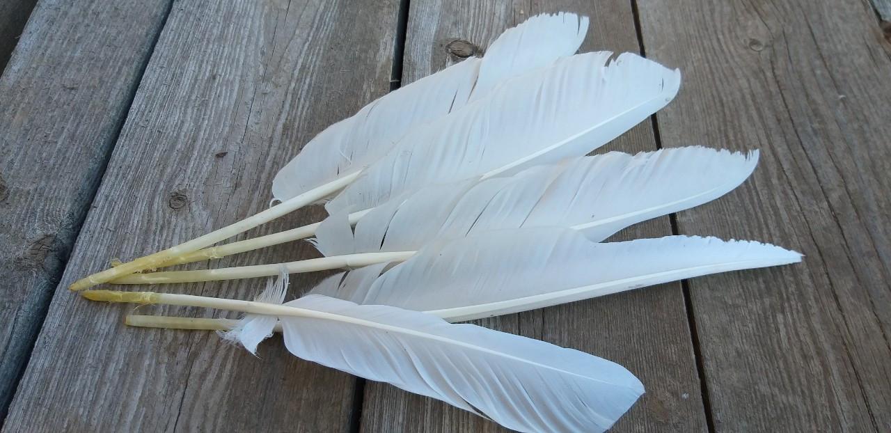 Натуральное перо гуся белого цвета, выс. 20-30 см, 5 шт. в упаковке