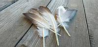 Красивое натуральное перо, цвет - серо-белый, выс. 10-12 см, 5 шт. в упаковке